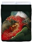 Two Australian Honey Possums Feed Duvet Cover