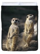 Two Meerkats, Suricata Suricatta, Stand Duvet Cover