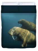 Two Pacific Walruses Swim Together Duvet Cover