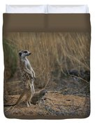 Using Its Tail, An Adult Meerkat Duvet Cover