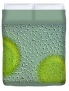 Volvox Globator Surface View Of Colony Duvet Cover