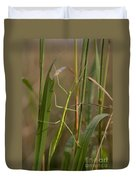 Walking Stick Insect Duvet Cover by Ted Kinsman