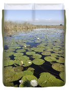Water Lily Nymphaea Sp Flowering Duvet Cover