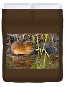 Water Vole At Dusk Duvet Cover