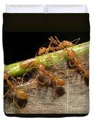 Weaver Ant Oecophylla Longinoda Group Duvet Cover