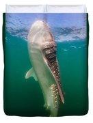 Whale Shark, La Paz, Mexico Duvet Cover