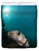 Wide-angle Image Of Pufferfish, Raja Duvet Cover
