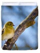 Winter Morning Song Bird Duvet Cover