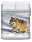 Wolf Canis Lupus Walking In Snow Duvet Cover