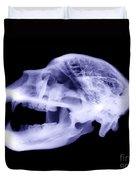 X-ray Of Kodiak Bear Skull Duvet Cover