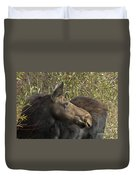 Yearling Calf On Alert Duvet Cover