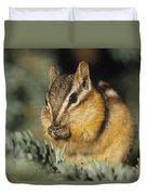 Yellow Pine Chipmunk, Kananaskis Duvet Cover