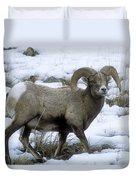 Yellowstone Big Horn Sheep Duvet Cover