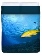 Yellowtail Snapper, Molokini Crater Duvet Cover