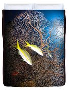Yellowtail Snappers And Sea Fan, Belize Duvet Cover