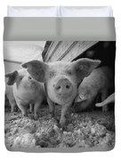 Young Pigs In A Snowy Pen. Property Duvet Cover