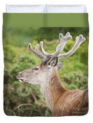 Young Red Deer Duvet Cover