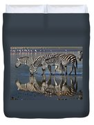 Zebras Drinking Ngorongoro Crater Tanzania Duvet Cover