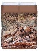 Escalante Canyon Desert Bighorn Sheep  Duvet Cover