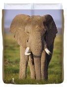 African Elephant Loxodonta Africana Duvet Cover by Gerry Ellis