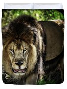 African Lion  Duvet Cover