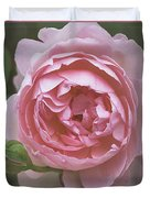 Alnwick Rose 1830 Duvet Cover