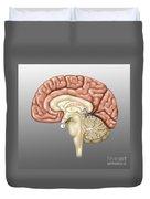 Anatomy Of The Brain, Illustration Duvet Cover