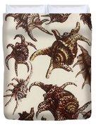 Aquatic Animals - Conch - Shells - Snails Duvet Cover