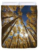 Autumn Aspens Duvet Cover