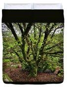 Beech Tree Duvet Cover