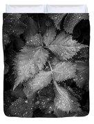 Bellevue Botanical Garden Leaves 6395 Duvet Cover