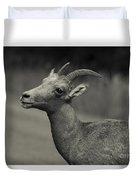 Big Horn Sheep Duvet Cover by Barbara Schultheis