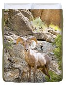 Bighorn Sheep In The San Isabel National Forest Duvet Cover