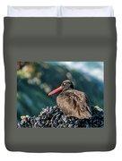 Black Oystercatcher Duvet Cover