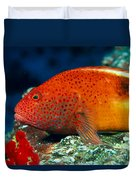 Blackside Hawkfish Duvet Cover