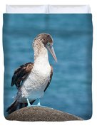 Blue-footed Booby On Rock Duvet Cover