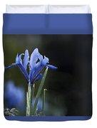 Blue Iris Hermodactyloides Duvet Cover