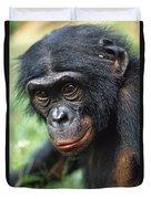 Bonobo Pan Paniscus Portrait Duvet Cover