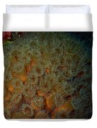 Coral Feeding At Night Duvet Cover