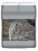 Curious Wandering Bobcat Duvet Cover