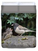 Dark-eyed Junco Mother And Baby Duvet Cover