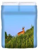 Deer Buck. Duvet Cover