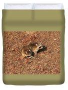 Green Heron Babies Duvet Cover