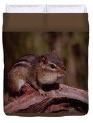 Eastern Chipmunk On Stump Duvet Cover