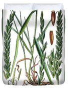 Elymus Repens, Commonly Known As Couch Grass Duvet Cover