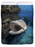 Giant Grouper, Great Barrier Reef Duvet Cover