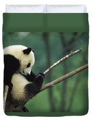 Giant Panda Ailuropoda Melanoleuca Year Duvet Cover
