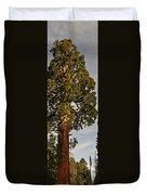 Giant Sequoia Duvet Cover