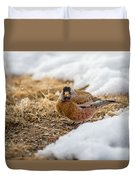 Gray Capped Rosy Finch In The Snow Duvet Cover