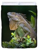 Green Iguana Iguana Iguana, Sarapiqui Duvet Cover